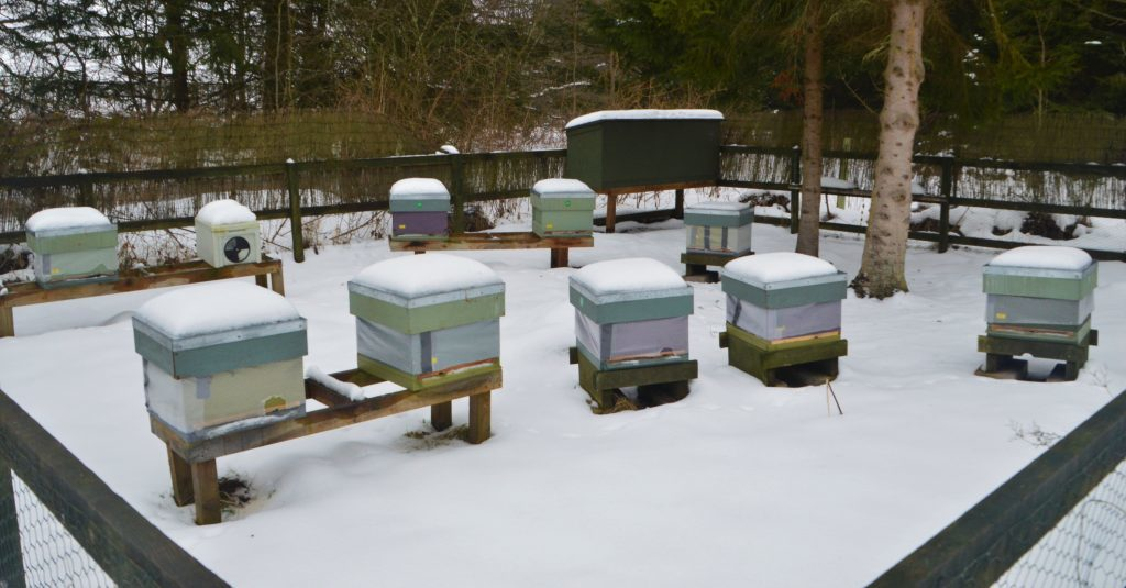 Perfect Storm for Winter Bees and Winter Beekeepers