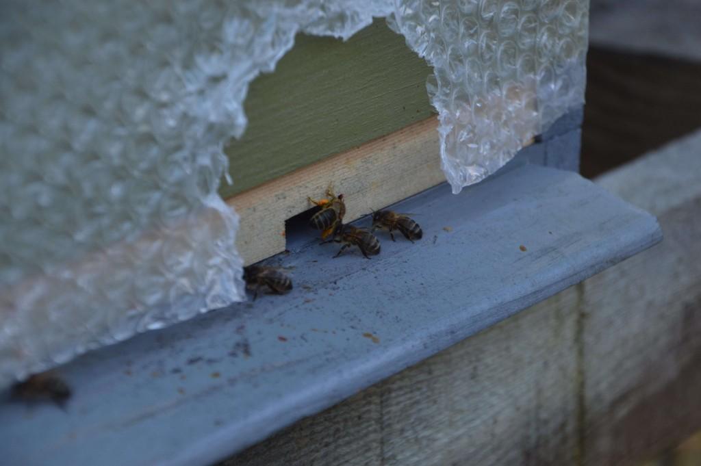 First Pollen of Season