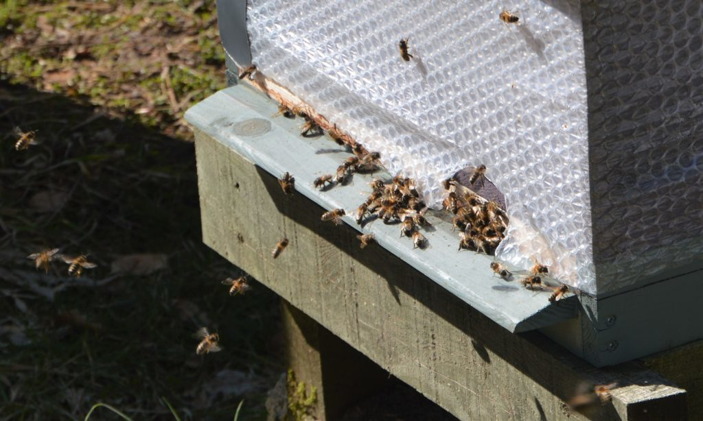 Bees break cluster and actively foraging but more cold weather on its way