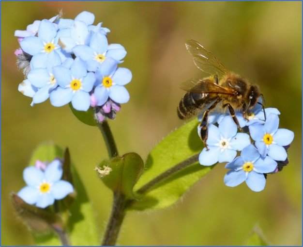 Pollen Microscopy – taking a closer look at spring forage