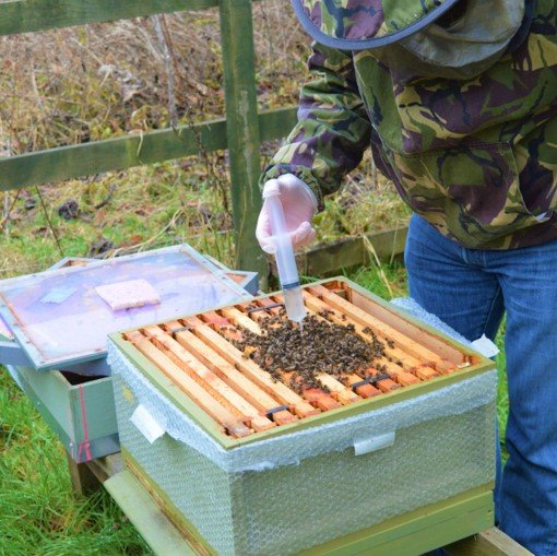 Simple Oxalic Acid trickling method for the management of Varroa