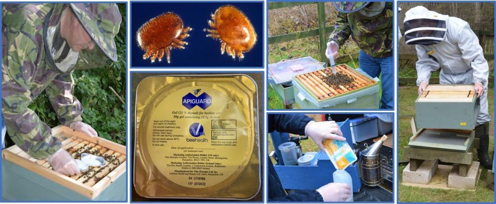 Simple Varroa management for small-scale beekeepers
