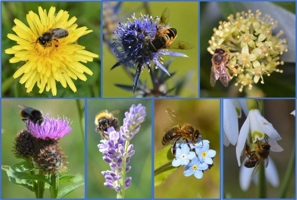 Plants for Bees Gallery