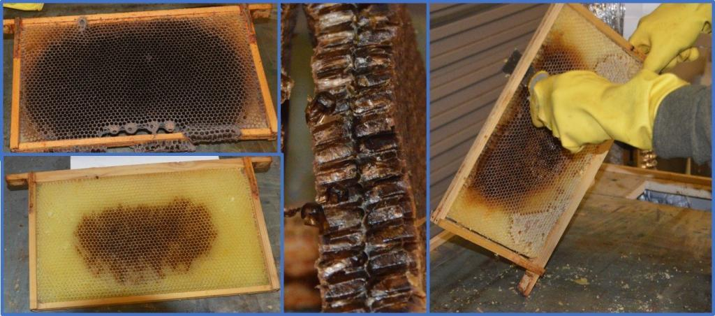 Cleaning & sterilisation for small-scale beekeepers – Part Two – Assessing Brood Frames